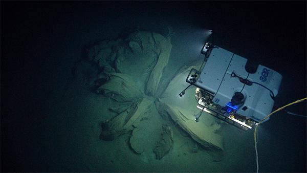 Робот Deep Discoverer исследует глубины океана